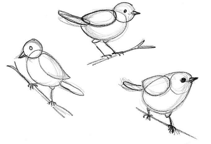 KCDbirddrawings2