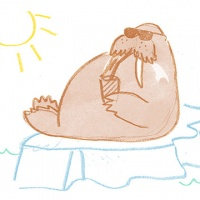 vacationwalrus_le
