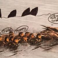 Greta 8, Ducks