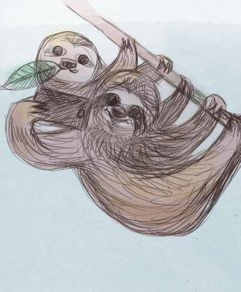 sloths taking selfies