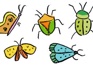 doodle bugs thumbnail